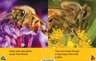 honey bees spread
