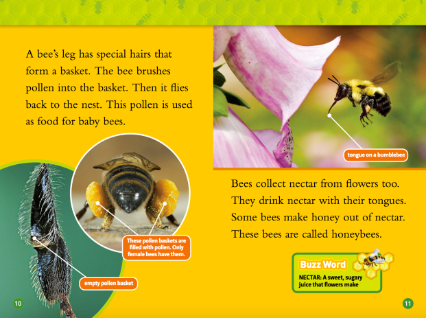 national geo bees spread.png